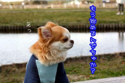 55_20090317113520.jpg