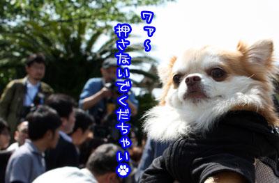 56_20090509121423.jpg