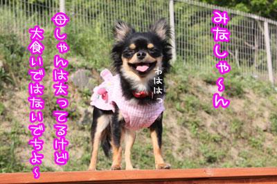 57_20090518004806.jpg