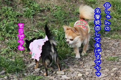 58_20090518004753.jpg