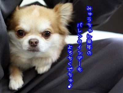 602_20090315215722.jpg