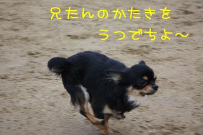 6_20090205021238.jpg