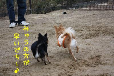 7_20090205021448.jpg
