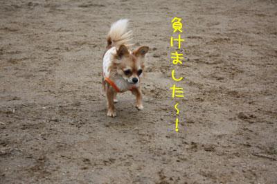 8_20090205022011.jpg