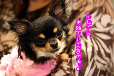 900_20090323005831.jpg