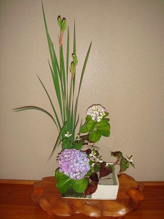 200604花 002ブログ