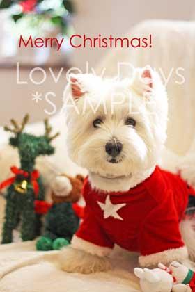 29-Merry-Christmas-(Westie).jpg