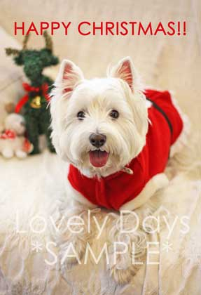 30-Merry-Christmas-(Westie).jpg