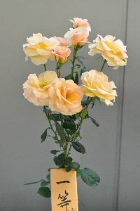 20111104 (63)