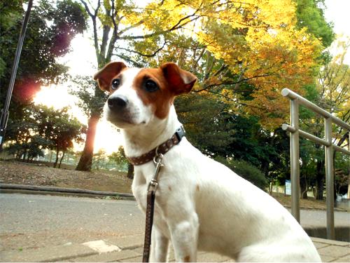 駒沢散歩3 のコピー
