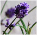小さなお花が…♪