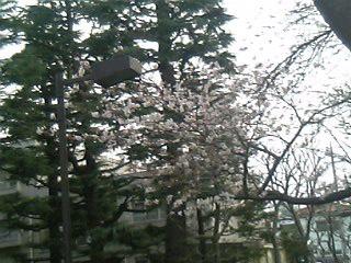 05-04-06_17-05.jpg