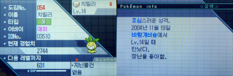 20111126 韓国色チュリネ