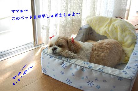 DSC_1377m.jpg