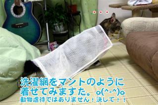ジャガー洗濯ネット4