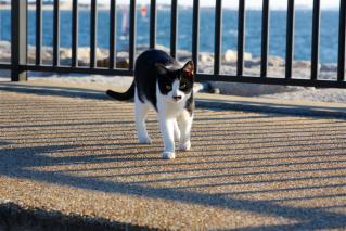 偶然出会った猫3