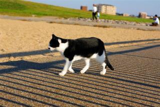 偶然出会った猫5