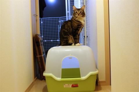 ジャガートイレ2