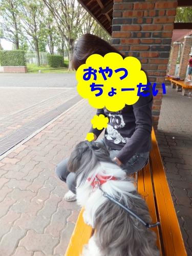 BLOGDSC110925007_edited-1.jpg