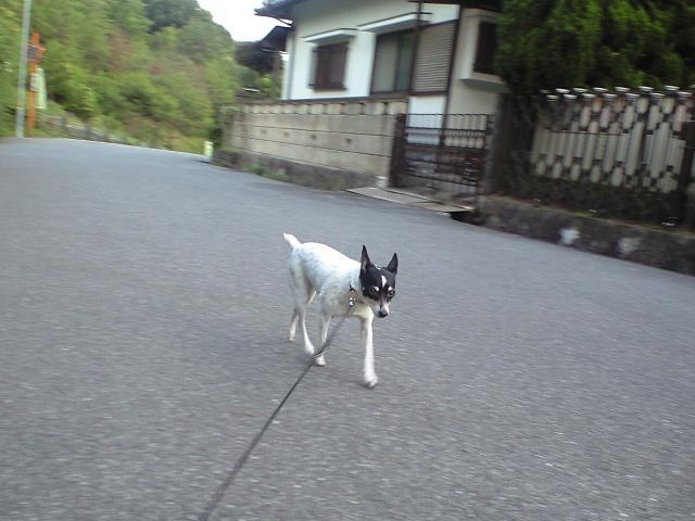 お散歩(^-^)