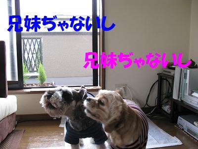 001_20081027012746.jpg