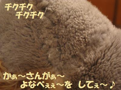 001_20081107003317.jpg