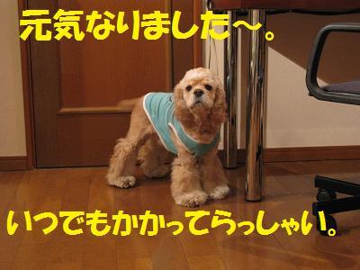 003_20081124125638.jpg