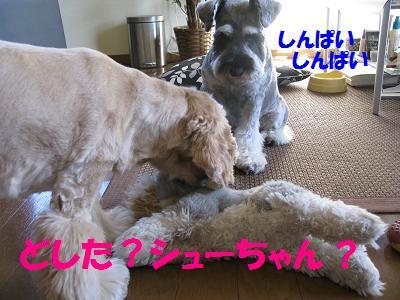 004_20081104234635.jpg
