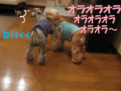 006_20081124125701.jpg