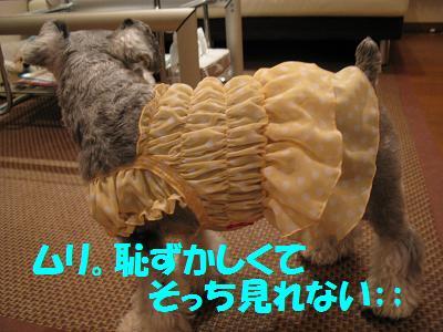 007_20081118113350.jpg