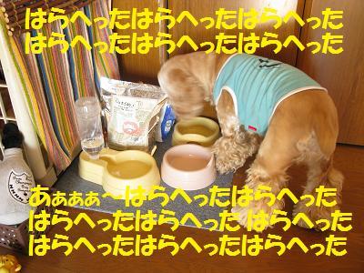 010_20081122204242.jpg