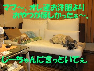 027_20081118113410.jpg