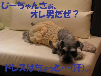031_20081118113419.jpg
