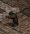 クマ変身ボクシング