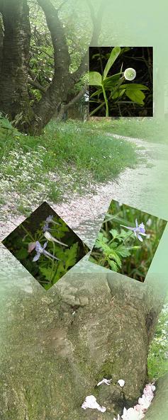 駒場の土手沿いの花