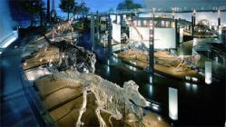 福井県立恐竜博物館より