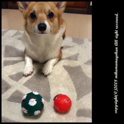 ボールをいただくミクはん