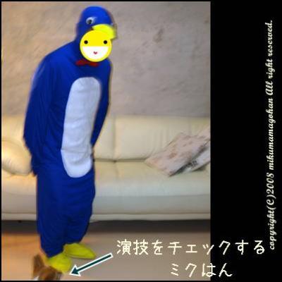 ペンギンになりきるミクパパ