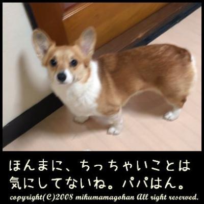 289_20090119120526.jpg
