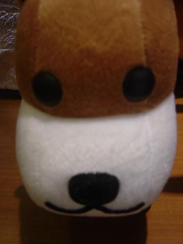 アフロ犬1