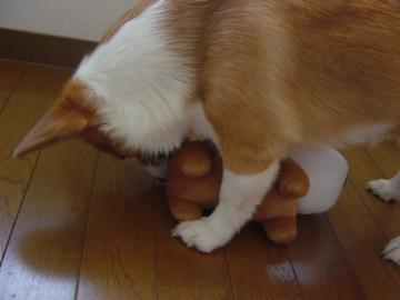 アフロ犬4