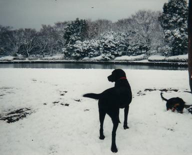 雪の若いミニー