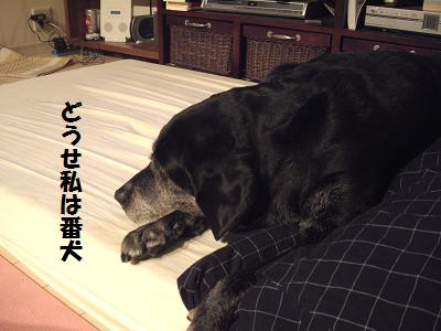 番犬ミニー