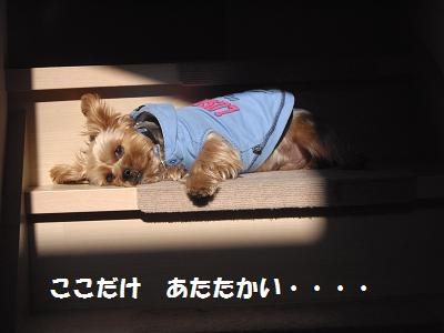 階段で日光浴