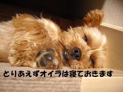 寝てごまかす
