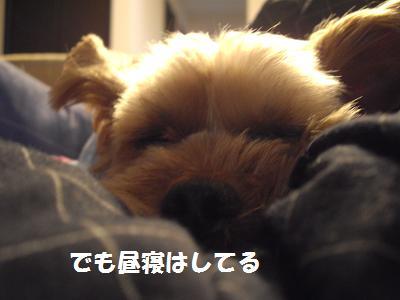 昼寝をばらす