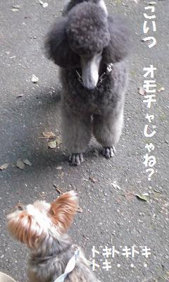 灰色プーとモカ