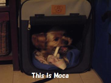 this is moca