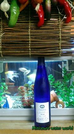 本水槽を眺めながらワイン③