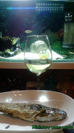 本水槽を眺めながらワイン④